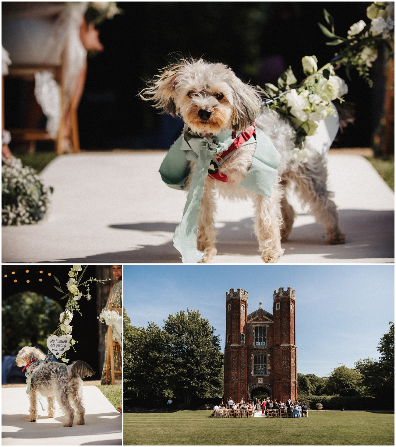The brides dog features during the wedding ceremony